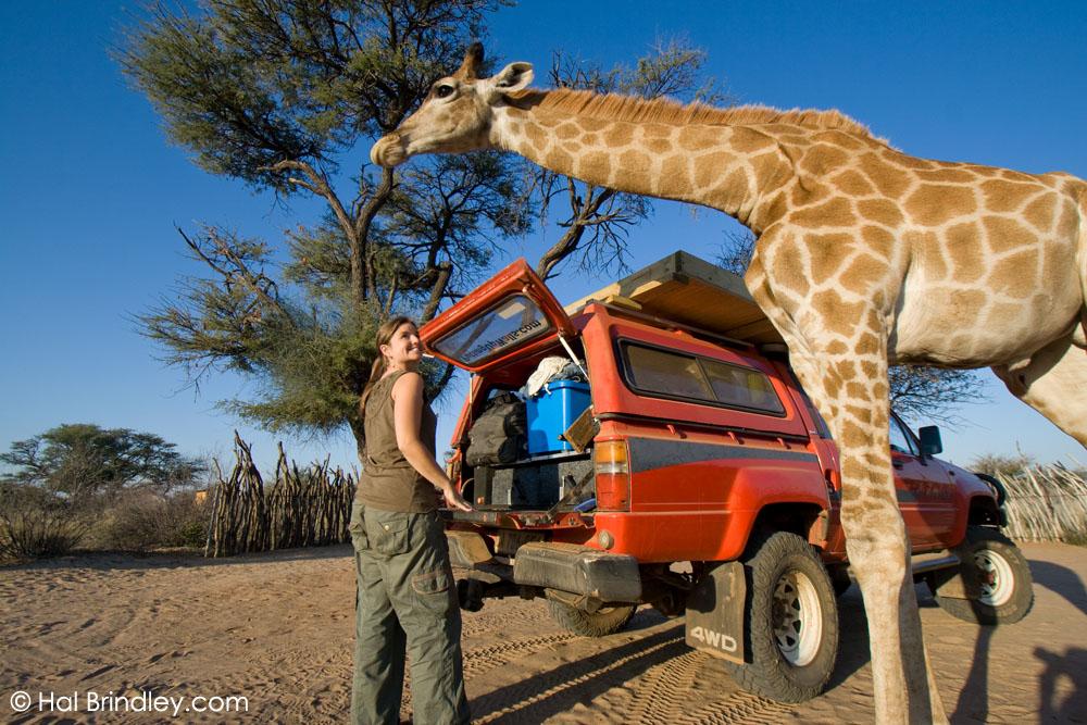 Kalahari Rest Campsite Botswana Travel For Wildlife
