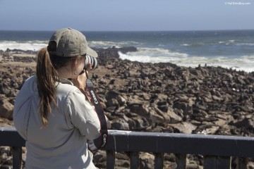 Photographing Cape Fur seals in Namibia