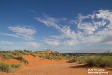 Kalahari red dune