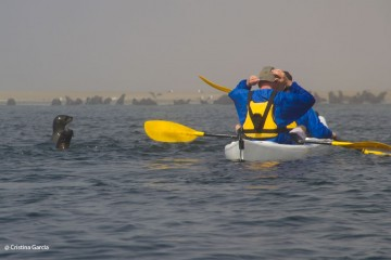 Two seals surface to check out kayakers