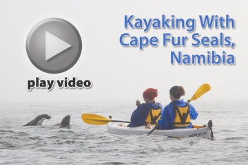 Video: Kayaking with Cape Fur Seals in Namibia