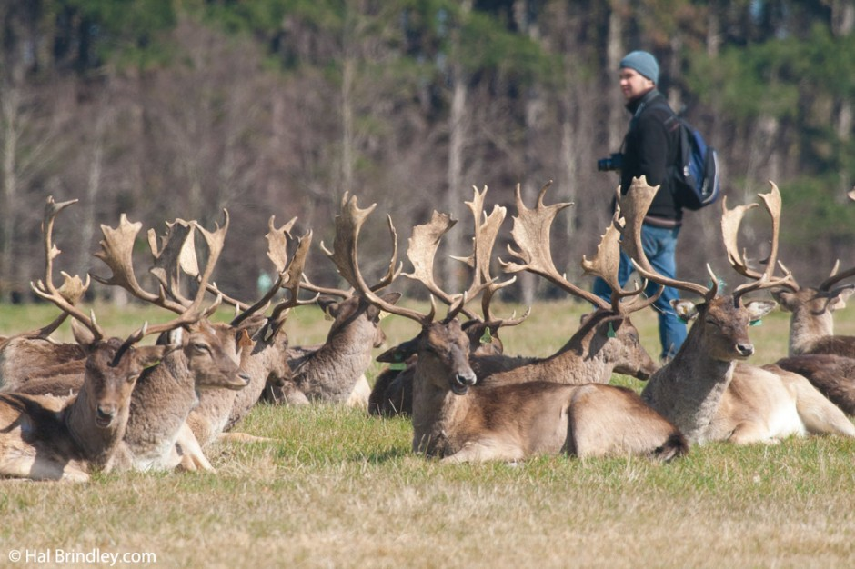 Even if you can get really close to the deer, respect their space.