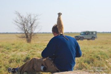 There is a meerkat on my head