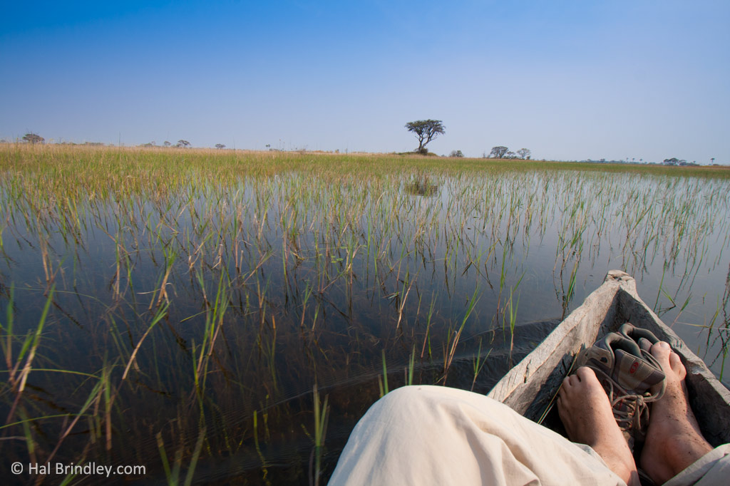Into the Okavango.