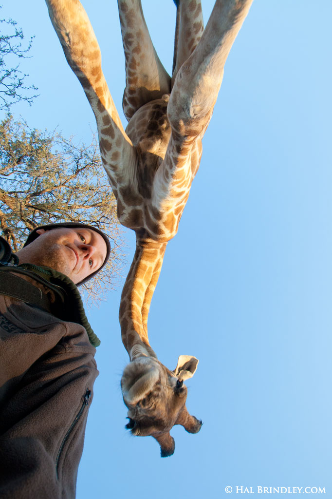 Self portrait, Hal Brindley and Josh the Giraffe, Kalahari Dessert Botswana