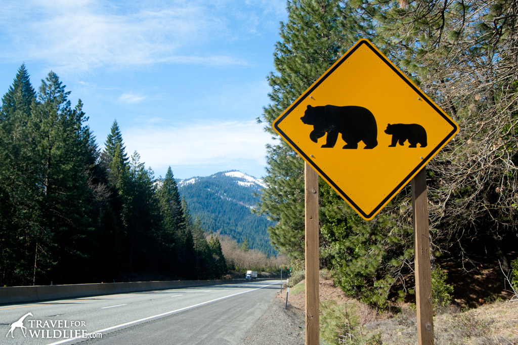 20 Animal Crossing Signs Travel For Wildlife