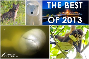 The Best Wildlife Encounters, Sustainable Lodges and Wildlife Heroes of our 2013