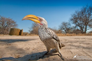 A hornbill and the shower enclosure