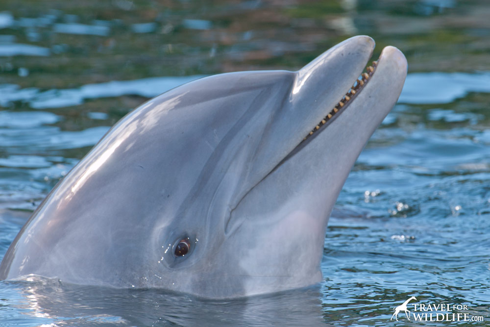 Dolphins don't smile