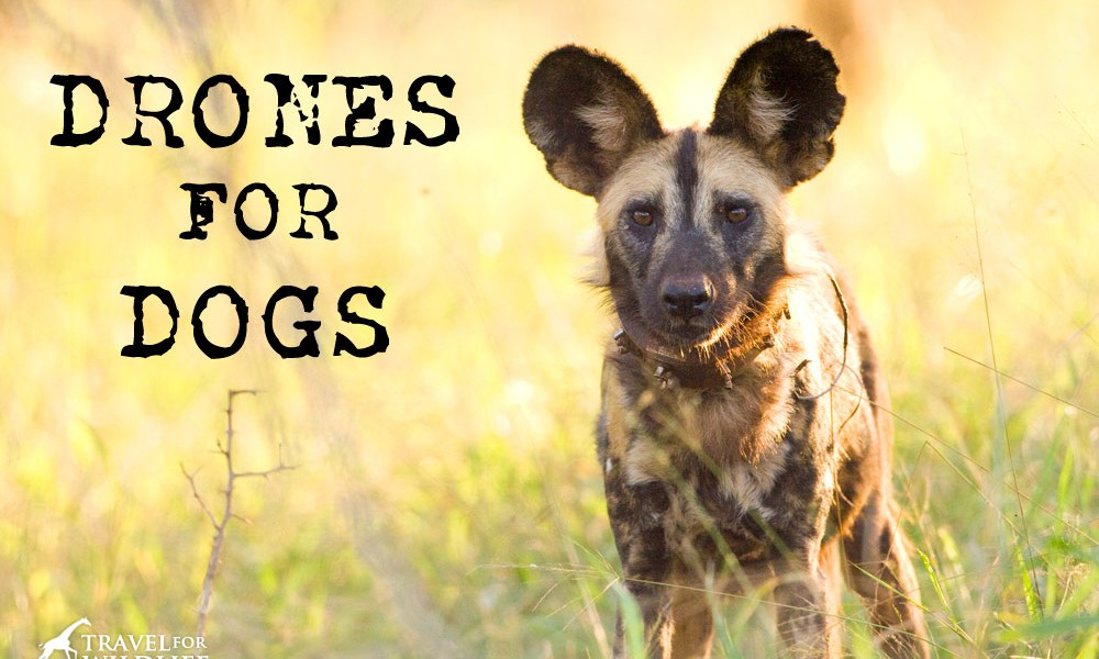 Drones for dogs