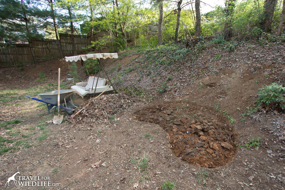 How to build a pond for wildlife - Build pond wildlife haven ...