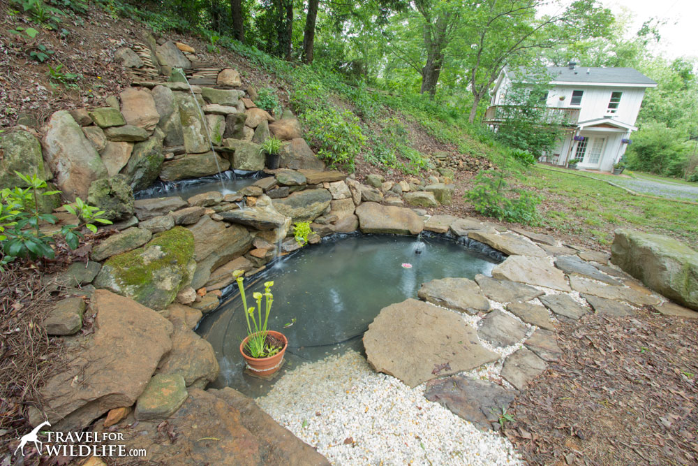 How to build a pond for wildlife for Creating a pond