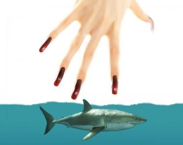 human-attacks-shark