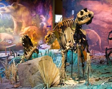 Alligators, rhinos, and tapirs (right) lived around this waterhole