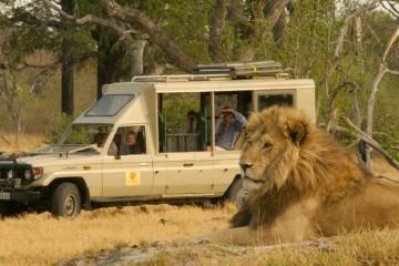 Watching lions in Botswana